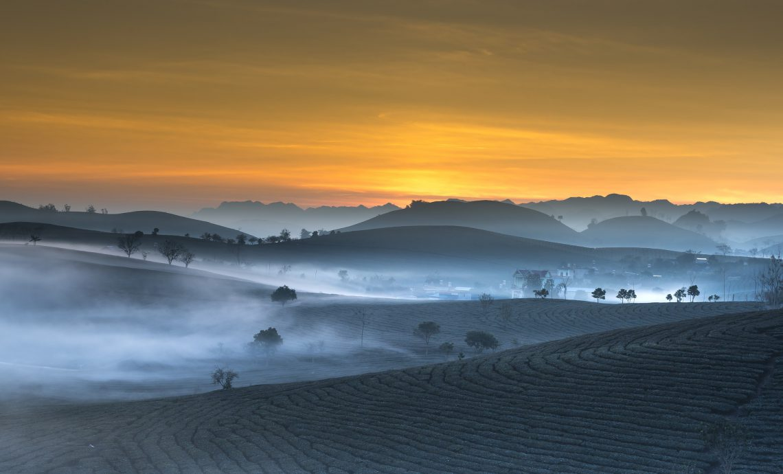 Teeplantage.jpg